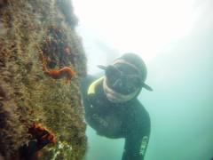 GOPR5957 (ambrogi_taubate) Tags: naturezaselvagem marinha mergulhando ubatuba sp brasil naturezamarinha fantstica apneia 10m setembro primavera 2016