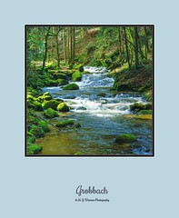 Grobbach (M.J.Woerner) Tags: nature forest forestry outdoor wood badenbaden blackforest stream torrent river flow moss driftwood