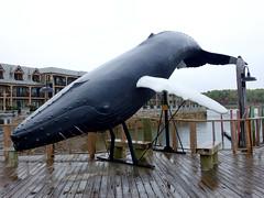 Whale Watch (keyphan06) Tags: newengland whale 2016 maine barharbor streetscenes