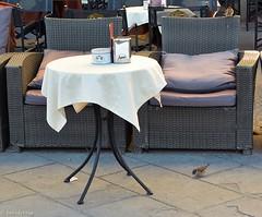 """Breakfast at """"Caff degli Specchi"""" - Trieste (boisderose) Tags: caffdeglispecchi trieste piazzaunit passerotti sparrows colazione breakfast 2016 boisderose"""