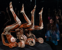 Peepshow (subterraneancarsickblues) Tags: amsterdam holland netherlands exhibition exposition bodyworlds body human anatomy plastination gunthervonhagens canon 6d eos6d 1635mm f4l lseries