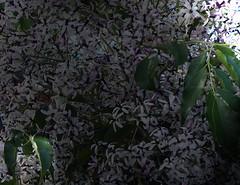 La Palma 29 (megegj)) Tags: gert bloem flower fleur fiore blume