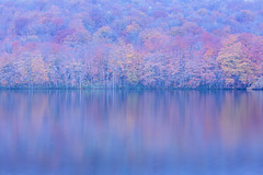 Red Maples in the Snow  (Sharleen Chao) Tags: lake refleciton autumn travel trip vocation canon 5dmarkiii 70200mm landscape japan aomori tsuta snow bluetone cpl