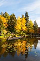 Seattle Japanese Garden (Valerii T) Tags: seattle seattlejapanesegarden usa wa washington