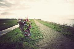 IMGP4999vf (hans hoeben) Tags: flowers unknowninmemoryof markenhollandflowersunknowninmemoryofmarkenholland mermory marken holland rip life is fragile pentax k5 dutch former island memory fatal