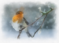 robin redbreast (alanpeacock2) Tags: robin watercolour art
