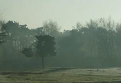 Eenzame boom. (limburgs_heksje) Tags: nederland niederlande netherlands noord brabant beekse bergen safaripark dierenpark