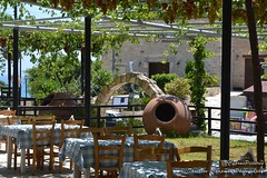 Artemis Restaurant (@CyprusPictures) Tags: cypruspictures photosofcyprus pissouribay pissouri artemisrestaurantpissouri thulbornchapmanphotography grapes grapevine photooftheday
