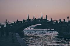 Venetian sunsets (Nicole Favero) Tags: life bridge venice trees houses sky cute verde love water effects reflex crazy amazing cool nikon mine path awesome forever biennale architettura 2014 photogrraphy nikond5000 nicolefavero