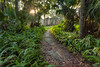 The trail and the Ruins. (Camino a las Ruinas). (Samuel Santiago) Tags: nature digital sunrise landscape florida trail newsmyrnabeach canonef1740mmf4l canon5dmkii topazadjust5 lightroomcc crugerdepeysterplantationsugarmillruins
