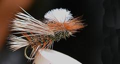 Parachute_Caddis-Q15m (Guyser1) Tags: fly fishing flyfishing nikond3200 caddisfly fishingfly westyellowstone