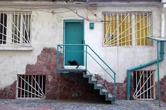 Sofia, Bulgaria (Sanne Aabjerg) Tags: cats sofia bulgaria balkan