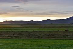 VESTURLAND - Hömluholt countryside (Andrea Zille) Tags: iceland islanda republicoficeland lýðveldiðísland islandazilleandrea