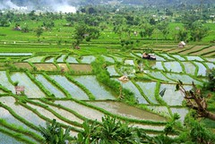 Rice Terrace (myview11) Tags: travel bali 1 nikon rice paddy terrace v1 karangasem myview11