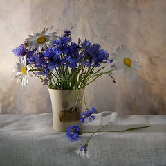 summer evening (Button-NK) Tags: flowers stilllife cup chamomile cornflowers