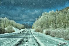 MY SNOWGLODE WORLD (Aspenbreeze) Tags: road winter snow mountains ice nature clouds rural outdoors colorado frost peaks grandmesa mountainpeaks frostedtrees frosttrees grandmesacolorado aspenbreeze moonandbackphotography bevzuerlein smpwsnowfalling
