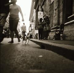 Occhio al cane.... (Claudio Taras) Tags: street shadow bw dog film bokeh claudio rom taras streetshot contrasto bichrome rolleiflex35f microphen