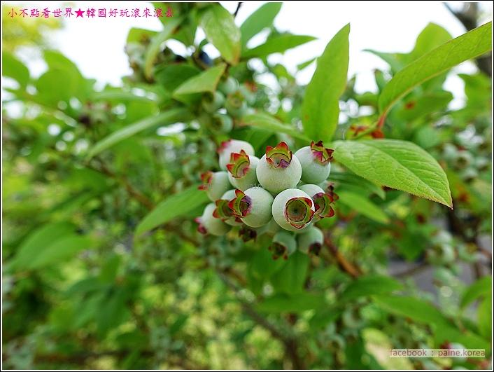 大田韓巴樹木園 (20).JPG