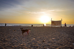 Beach life (Premnath Thirumalaisamy) Tags: morning people dog beach sunshine sunrise earlymorning photowalk chennai beachwalk thiruvanmiyur tiruvanmiyur