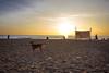 Beach life (Premnath Thirumalaisamy) Tags: morning people dog beach sunshine sunrise earlymorning photowalk chennai beachwalk thiruvanmiyur tiruvanmiyur