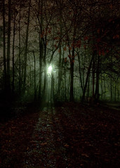 IMG_0012 Who's There (oldimageshoppe) Tags: fall rain fog mystery night ominous lowvisibility