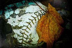 Baseball Decay (ildikoannable) Tags: old macro fall closeup leaf baseball decay olympus stiches