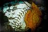 Baseball Decay (ildikoannable) Tags: old macro fall closeup leaf baseball decay olympus stiches