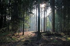 Heavenly Light (danieloss86) Tags: heavenlylight licht forest wald lichteinfall sonnenstrahlen sunbeams sunny sonnig nature natur germany ebstorf niedersachsen lowersaxony