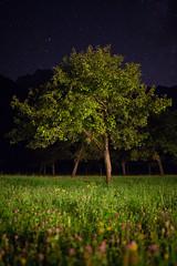 Starfield, Logarska Dolina (flatworldsedge) Tags: orchard slovenia night nocturne tree grass flowers wild sky stars ambient logarska dolina savinjska leaves summer low pov