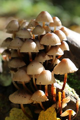 Mushroom's family (Angela Busato) Tags: funghi autumn family underbrush wood
