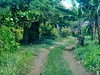 Tracks Through the Greenery (mikecogh) Tags: samoa lealalii village col casestudy meti track greenery vegetation fertile verdant