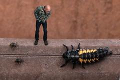 It's a Bug Eat Bug World Out There (The.Mickster) Tags: self portrait macro bug randy 365 composite ladybuglarva hereios