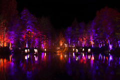 The Enchanted Forest (EricHarden) Tags: lights night forest enchantedforest perthshire pitlochry woods show event scotland enchnated d7100 nikon nikkor 18200mm purple blue reflections water