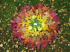Autumn leaves are so colourful this year! (Green_blade) Tags: leaves autumncolours rainbows patterns leaffall mandala