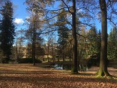 324/2016 Sunshine over the pond (puste66blume) Tags: 3662016 herbst inesbilder limbachoberfrohna stadtpark teich iphoneines puste66blume