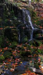 IMG_5774.jpg (newminaswilders) Tags: freshwater nature waterfalls fallcolours cambridge novascotia canada ca