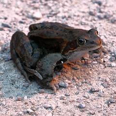 Jazz Makkonen (neppanen) Tags: sampen discounterintelligence helsinki helsinginkilometritehdas suomi finland piv76 reitti76 pivno76 reittino76 sammakko toad frog jasmakko