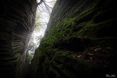 Vegetable meets mineral (Frdric Pactat) Tags: d 750 20 mm f 18 f18 nikon d750 afs ed nikkor fx 20mm f18g faille sous terre undergournd light colors rift vegetable wall moss mousse brouillard fog