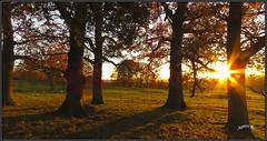 Setting Sun. (Picture post.) Tags: landscape nature green sunset oak trees shadows fields winter goldenhour paysage arbre sunburst afternoon interestingness autumncolor