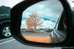 2-web-watermark (Brian M Hale) Tags: infrared ir infra red mirror reflections reflection tree parking lot cars brian hale brianhalephoto
