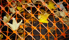 Leaves in the Orange Net 2 of 2 (Orbmiser) Tags: 55200vr d90 nikon oregon portland leaf leaves orange net plastic