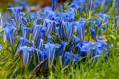 Flowers 2 (Steve_McCaul) Tags: beginnerdigitalphotographychallengewinner