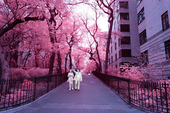 All White on Pink Way (jrseikaly) Tags: all white pink way multicolor infrared ir color nyc new york city path people portraits environmental jack seikaly jrseikaly photography canon t5