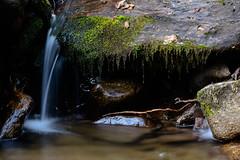 Cascata (franklinomis) Tags: bosco cascatella acqua muschio autunno