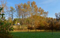 McDonough Fall Color (thoeflich) Tags: autumncolors mcdonoughwildliferefuge fall falllandscape autumnleaves fallcolor westvirginia