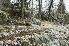 Skatenmyran november 2016 (Anders Sellin) Tags: 2016 lantstlle sverige sweden stockholm skrgrd archipelago baltic sea stersjn november hst sn kallt cold lantstlle