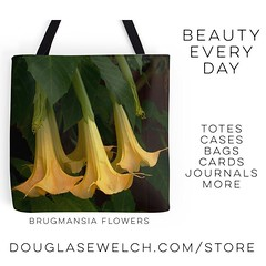 Get these Brugmansia Flowers Tote Bag and much more! #totes #products #flowers #garden #nature #home #housewares #arts #crafts #art (dewelch) Tags: ifttt instagram get these brugmansia flowers tote bag much more totes products garden nature home housewares arts crafts art