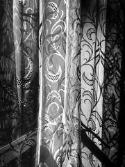 Cuddiwch ein byd (Rhisiart Hincks) Tags: homecafé aberystwyth heolywig duagwyn gwennhadu dubhagusgeal dubhagusbán zuribeltz czarnobiałe blancinegre blancetnoir blancoynegro blackandwhite 黒と白 mustajavalkoinen crnoibelo černáabílá schwarzundweis اسودوابيض، bw feketefehér melnsunbalts juodairbalta negrușialb siyahvebeyaz črnoinbelo черноеибелое чорнийібілий ewrop europe europa kembra wales cymru a'chuimrigh kembre gales galles anbhreatainbheag llenni curtains rideozioù cafaidh caffi caffe café cafe kafetegi kafe kafedi net