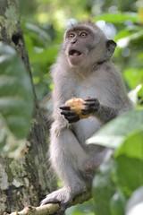 DSC_3862 (tihoslic3) Tags: slicomir3 monkey ubud
