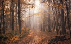 November light (Stefan Sellmer) Tags: schleswigholstein autumn dream wow landscape herbst woods germany mood gold wald light sunbeams leaves november trees d750 sunshine kiel nature outdoor deutschland de